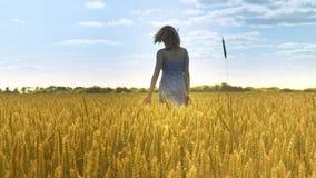 Γυναίκα στον τομέα σίτου Γυναίκα που περπατά μακριά στο έδαφος γεωργίας στον καιρό ήλιων φιλμ μικρού μήκους
