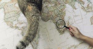 Γυναίκα τουριστών που εξετάζει τον παγκόσμιο χάρτη με την περιπέτεια ταξιδιού προγραμματισμού γατών Τοπ όψη απόθεμα βίντεο
