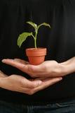γυναίκα φυτών χεριών στοκ φωτογραφίες με δικαίωμα ελεύθερης χρήσης