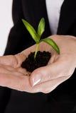 γυναίκα φυτών s χεριών Στοκ εικόνες με δικαίωμα ελεύθερης χρήσης