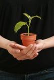 γυναίκα φυτών s χεριών στοκ φωτογραφία