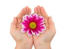 γυναίκα χεριών λουλου&del στοκ φωτογραφία με δικαίωμα ελεύθερης χρήσης