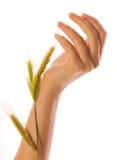 γυναίκα χεριών Στοκ φωτογραφίες με δικαίωμα ελεύθερης χρήσης