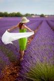 Γυναίκα Brunette που περπατά lavender στον τομέα στην Προβηγκία, Γαλλία. Στοκ Φωτογραφίες