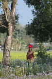 Γυναίκα Taru που περπατά στον τομέα Terai στο Νεπάλ Στοκ Εικόνα