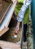 Γυναίκα Unrecognisable που συλλέγει τα ελεύθερα αυγά σειράς από το σπίτι κοτόπουλου Ωοτόκες όρνιθες αυγών και νέος θηλυκός αγρότη στοκ εικόνες
