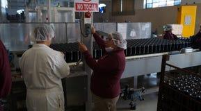 Γυναίκες εργαζόμενοι εμφιαλωτών κρασιού στοκ εικόνες