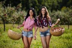 Γυναίκες που φέρνουν τα καλάθια με τα μήλα Στοκ εικόνα με δικαίωμα ελεύθερης χρήσης