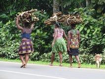 Γυναίκες που φέρνουν το ξύλο στοκ εικόνες