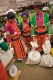 Γυναίκες των εθνικών πιπεριών τσίλι συγκομιδής ομάδας Palong στους τομείς Στοκ Εικόνες