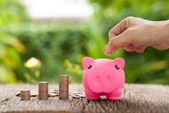 Γυναίκες χεριού που βάζουν τα νομίσματα σε μια piggy τράπεζα, την τράπεζα Piggy και τα χρήματα Στοκ Φωτογραφία