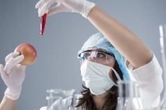 Γυναικείο εργαστηριακό προσωπικό που πραγματοποιεί το πείραμα με το ΓΤΟ και το δείγμα της Apple Στοκ εικόνα με δικαίωμα ελεύθερης χρήσης