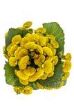 Γυναικείο πορτοφόλι, λουλούδι παντοφλών Στοκ φωτογραφίες με δικαίωμα ελεύθερης χρήσης