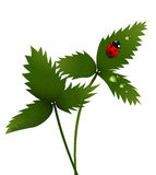 γυναικείο φύλλο πουλιώ& Στοκ εικόνα με δικαίωμα ελεύθερης χρήσης