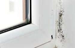 γωνία moldy Στοκ Εικόνες