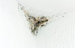 γωνία moldy Στοκ εικόνες με δικαίωμα ελεύθερης χρήσης
