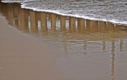 Γόμα θάλασσας Στοκ Φωτογραφίες