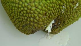 Γόμμα φρούτων του Jack που ρέει από calyx τη μείωση στο πάτωμα κεραμιδιών απόθεμα βίντεο