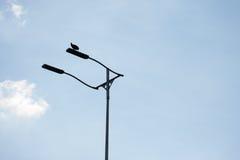 Γύπας που στηρίζεται στην ελαφριά θέση Στοκ εικόνα με δικαίωμα ελεύθερης χρήσης