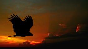 γύπας πτήσης Στοκ Εικόνες
