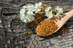 Γύρη μελισσών σε ένα ξύλινο κουτάλι και τα λουλούδια των δέντρων άνοιξη Apitherapy Στοκ Φωτογραφίες