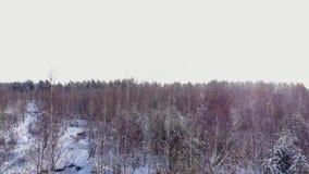 Γύροι αυτοκινήτων οδικώς στο χιονισμένο δασικό μήκος σε πόδηα Ακτίνες του ήλιου πρωινού εναέρια όψη Εναέρια άποψη ενός χιονώδους  απόθεμα βίντεο