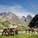Γύρος πλατών αλόγου στα βουνά Στοκ Εικόνες