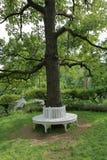 γύρω από το δέντρο πάγκων Στοκ φωτογραφία με δικαίωμα ελεύθερης χρήσης
