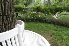 γύρω από το δέντρο πάγκων Στοκ εικόνες με δικαίωμα ελεύθερης χρήσης