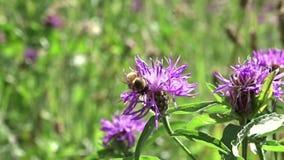 γύρω από το πέταγμα λουλουδιών μελισσών απόθεμα βίντεο