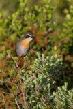 Γύρω από το Hermanus, Νότια Αφρική στοκ φωτογραφίες με δικαίωμα ελεύθερης χρήσης