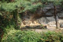 14 20 γύρω μπορούν λιοντάρια λιονταριών αιχμαλωσίας ζωντανά πέρα από τον άγριο ζωολογικό κήπο ετών Στοκ εικόνα με δικαίωμα ελεύθερης χρήσης