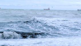 Γλάροι Μακριά στο πανί σκαφών θάλασσας Τα κύματα θάλασσας κυλούν στην ακτή απόθεμα βίντεο