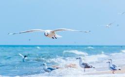 Γλάροι που πετούν στην παραλία Στοκ Εικόνες
