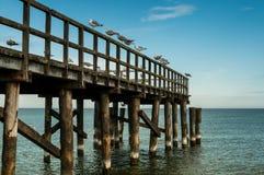 Γλάροι σε pier2 Στοκ εικόνα με δικαίωμα ελεύθερης χρήσης