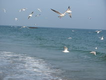 γλάροι στην παραλία Στοκ Φωτογραφία