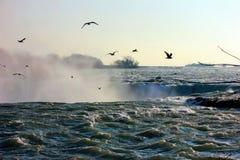 Γλάροι στην υδρονέφωση Στοκ φωτογραφίες με δικαίωμα ελεύθερης χρήσης