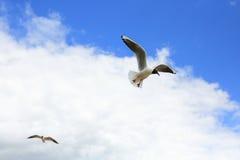 Γλάροι στον ουρανό Στοκ Φωτογραφία