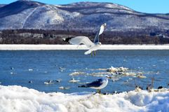 Γλάροι στον ποταμό Στοκ Εικόνες
