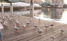 Γλάροι στο λιμάνι αγαπών στοκ εικόνα