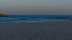 Γλάρος πάγου το πρωί σε Herzliya Στοκ Εικόνες