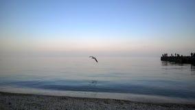 γλάρος πέρα από τη θάλασσα στοκ εικόνες