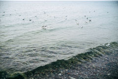 Γλάρος στα κύματα της θάλασσας της Βαλτικής Στοκ Εικόνα