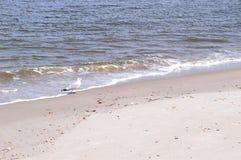 Γλάρος στην παραλία της Φλώριδας Στοκ εικόνα με δικαίωμα ελεύθερης χρήσης