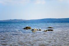 γλάρος Στοκ φωτογραφία με δικαίωμα ελεύθερης χρήσης