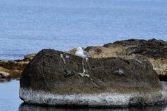 γλάρος Στοκ φωτογραφίες με δικαίωμα ελεύθερης χρήσης