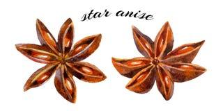 γλυκάνισου ανασκόπησης το κινεζικό αστέρι καρυκευμάτων κουζίνας ινδικό χρησιμοποίησε το λευκό ευρέως Στοκ Εικόνες