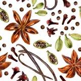 Γλυκάνισο αστεριών, ινδοπέπερι, βανίλια, γαρίφαλα και cardamon ελεύθερη απεικόνιση δικαιώματος