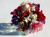 Γλυκά λουλούδια μπιζελιών που απομονώνονται στο άσπρο υπόβαθρο στοκ φωτογραφία