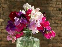 Γλυκά λουλούδια μπιζελιών που απομονώνονται στο υπόβαθρο τούβλου στοκ φωτογραφία με δικαίωμα ελεύθερης χρήσης